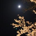 月に照らされる桜